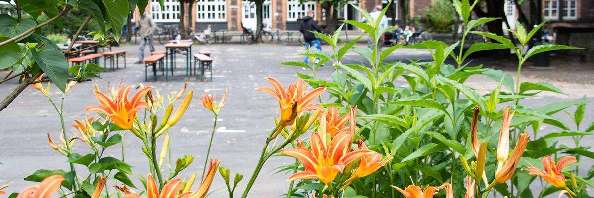 Blumen im autofreien Innenhof